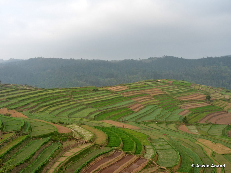 Terraced Farms