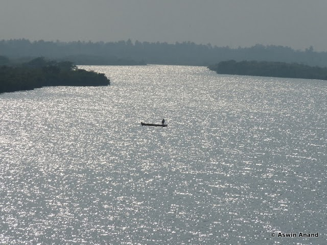 The lonely fisherman in the Pichavaram lake