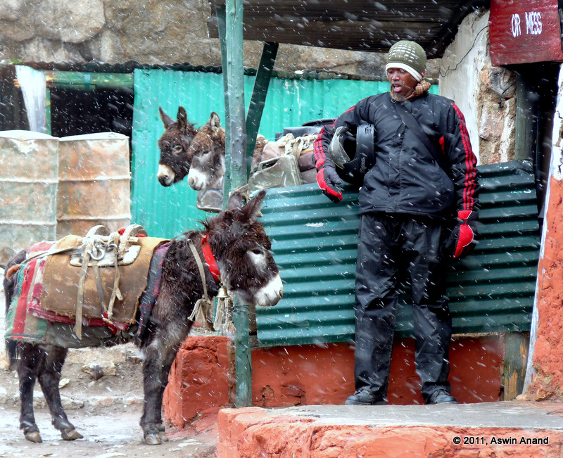 Donkey, Simon and Snow